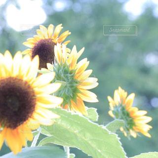 近くの花のアップの写真・画像素材[710794]