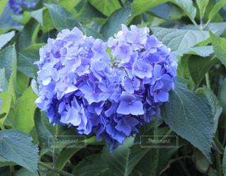 クローズ アップ庭園の緑の植物のの写真・画像素材[711948]