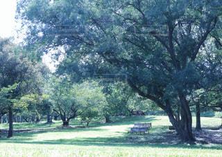公園の木の写真・画像素材[712831]