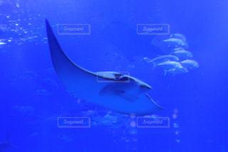 水面下を泳ぐ魚たちの写真・画像素材[1310815]