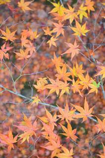植物の花と木の写真・画像素材[710652]