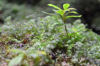 近くの緑の植物をの写真・画像素材[710655]