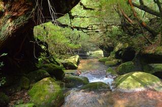 ツリーの横にある大きな滝の写真・画像素材[710656]
