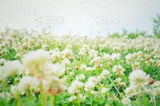 近くの花のアップの写真・画像素材[710724]
