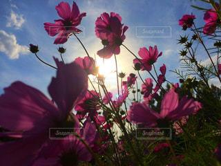 赤い花の上に座っての花で一杯の花瓶 - No.710947