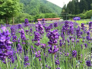 植物の紫色の花 - No.710952