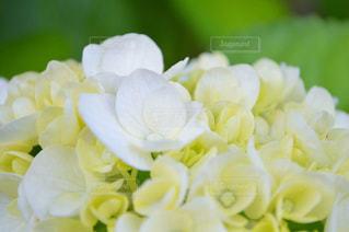 近くの花のアップ - No.712386