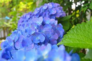 近くの花のアップの写真・画像素材[712389]