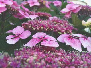 近くの花のアップの写真・画像素材[712395]