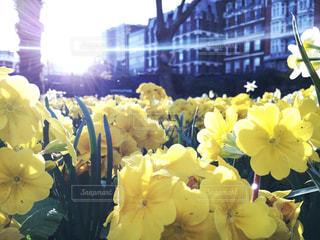 黄色い花の上に座っての花で一杯の花瓶の写真・画像素材[712710]