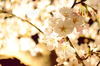 近くの花のアップ - No.712716
