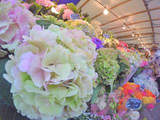 近くの花のアップの写真・画像素材[714538]