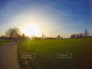 背景の木と大規模なグリーン フィールドの写真・画像素材[718691]