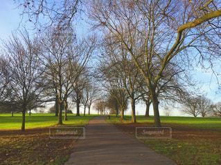 背景の木と大規模なグリーン フィールドの写真・画像素材[718692]