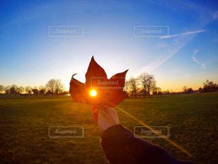 芝生のフィールドに沈む夕日の写真・画像素材[720854]