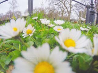 黄色の花の束 - No.722886