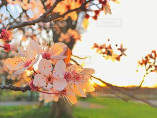 近くの花のアップ - No.724662
