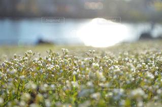 近くの花のアップの写真・画像素材[730766]