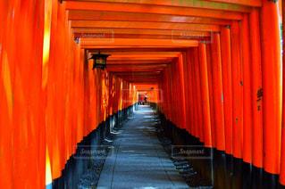 大きなオレンジ色の傘の写真・画像素材[736636]