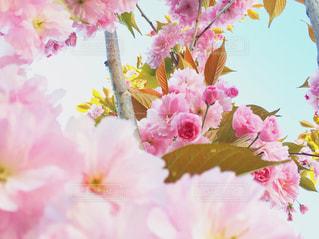 近くの花のアップ - No.740414