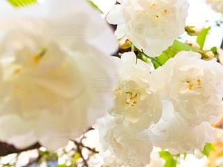 近くの花のアップ - No.740417