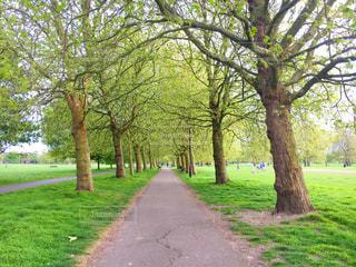公園内のパスの写真・画像素材[743012]