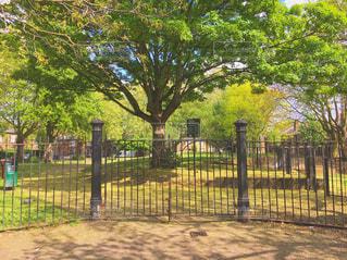 フェンスで囲まれたエリアの木の写真・画像素材[746838]