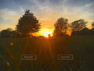 背景の夕日とツリーの写真・画像素材[749239]
