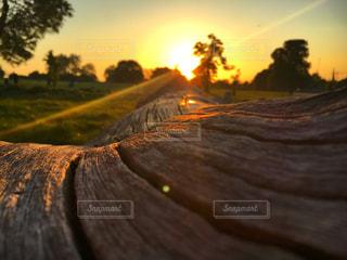 背景の夕日とツリー - No.763866