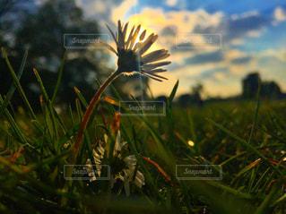 近くの花のアップの写真・画像素材[763871]