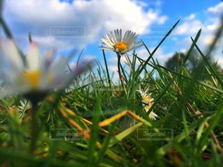近くの花のアップの写真・画像素材[763873]