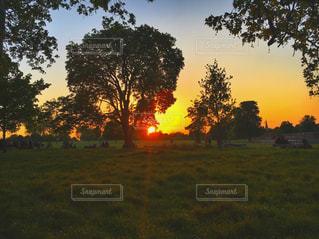 緑豊かな緑の草原で放牧の羊の群れの写真・画像素材[765704]