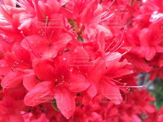 近くの花のアップの写真・画像素材[765728]