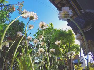 テーブルの上の花の花瓶の写真・画像素材[771212]
