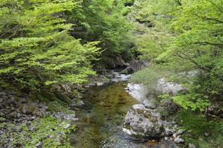 森の中の大きな滝の写真・画像素材[783741]