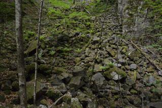 近くの木の横にある岩をの写真・画像素材[783754]