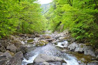 背景の木と岩の多い川 - No.783769