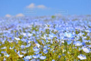 近くの花のアップ - No.791115