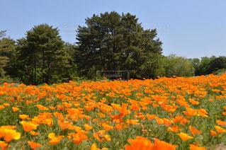 オレンジ色の花の写真・画像素材[791128]
