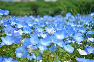 近くの花のアップの写真・画像素材[792744]