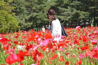 フィールドに赤い花を身に着けている男 - No.794710