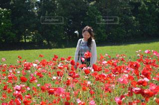 フィールドに赤い花の人の写真・画像素材[794715]