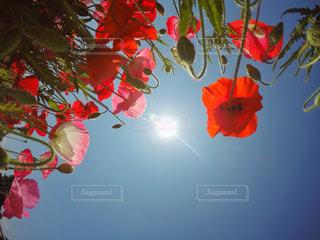 色とりどりの花の花瓶の写真・画像素材[799505]