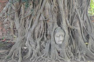近くの木のアップの写真・画像素材[818021]