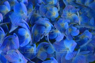 近くの花のアップの写真・画像素材[935069]