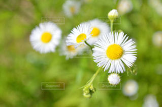 近くの花のアップ - No.935074
