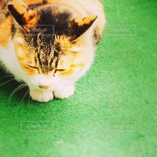 近くの地面に横になっている猫の写真・画像素材[768050]