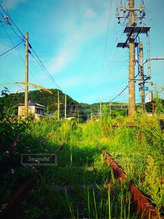 草の中に立っている人の写真・画像素材[714715]