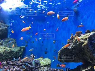 魚の写真・画像素材[228191]