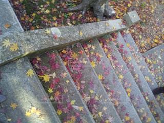 階段に落ちた紅葉の写真・画像素材[713050]